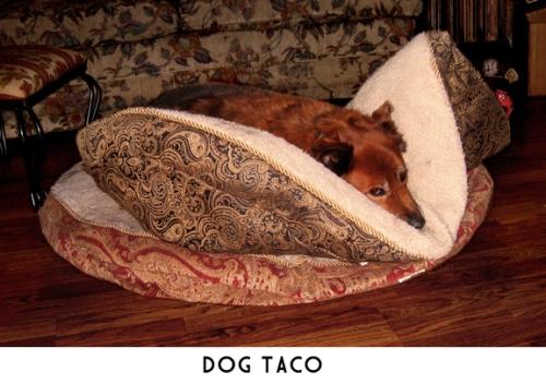 dog-taco