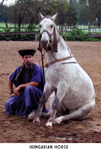 hungarian-horse4
