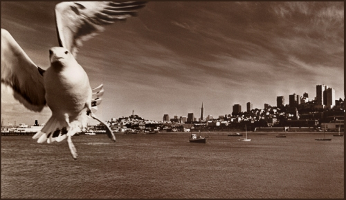 seagull-25