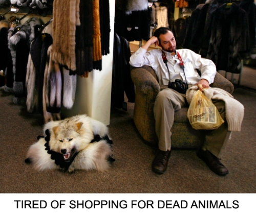 tired-of-shopping-for-dead-animals