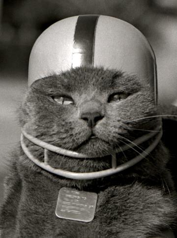 cat-in-football-helmet1