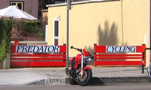 predator-cycling