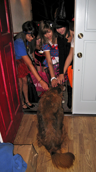 Red Dog and trick or treaters