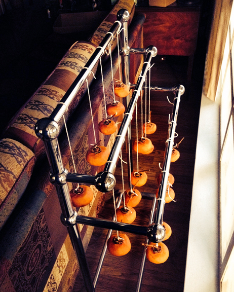 persimmons hanging